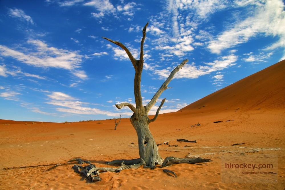 ナミブ砂漠(デッドフレイ)