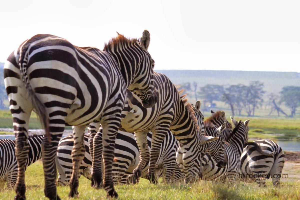 ナクル湖&マサイ・マラ国立公園(ケニア)